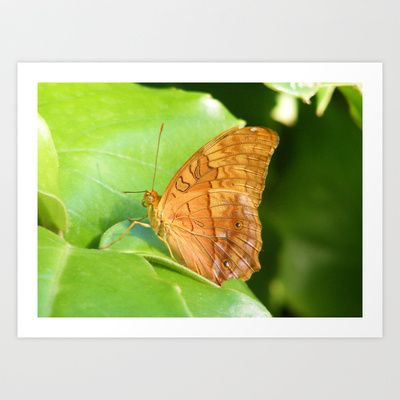 Butterfly 8 Art Print by Sheridan van Aken - $20.80