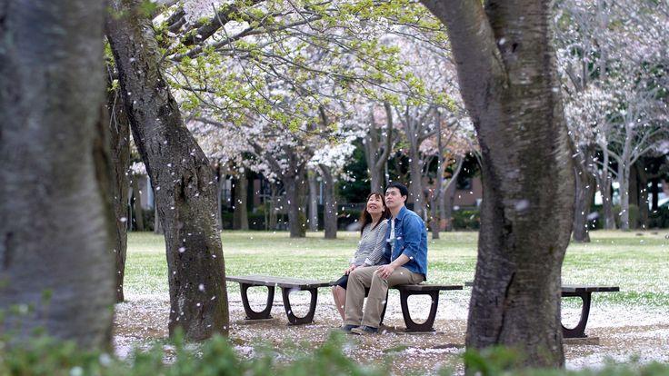 勇気を出した告白。 アンジェブリッサでのプロポーズ。 桜満開のもとでマタニティー撮影、そしてジュニア誕生! 3人で迎える、プロポーズをしたアンジェブリッサでの2015年6月結婚式。 告白(再現)〜プロポーズ(再現)〜マタニティ〜出産〜結婚式の幸せのドラマ&ドキュメント そして迎えた2015年5月アンジェブリッサの結婚式。ゲストが参加した挙式の様子を、速攻編集しておひらき時に撮って出しエンドロールとして上映します。会場は驚きと感動に包まれます。  トリニティブライダル https://www.facebook.com/TrinityBRIDAL.JP  Tsuyoshi + Chiyomi June.28.2015 Angebrisa  drama & Same Day Edit Cinemagrapher:Bunkou Tabe Editor:Bunkou Tabe Shot on a GH4 with LUMIX G X VARIO 12-35mm, 35-100mm F2.8, LUMIX G VARIO 7-14mm F4, 14-140mm F3.5-5.6…
