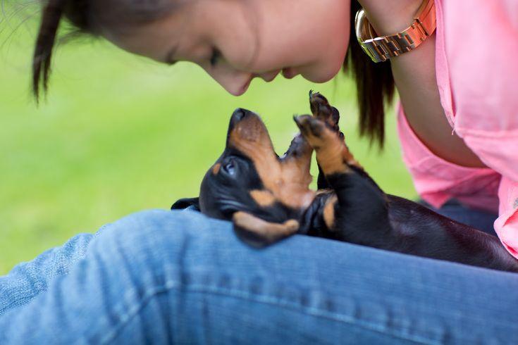 mini dachshund