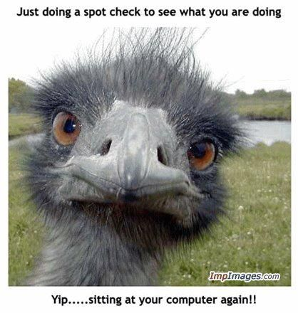 Just doing a spot check............: Profile Pics, Families Trips, Birds Pictures, Funny Images, Funny Meme, Funny Stuff, Computers Humor, Funny Faces, Peek A Boo