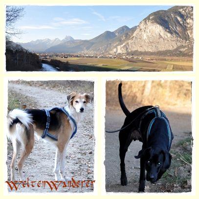 Hunde in den Bergen