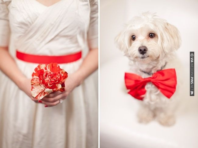Red tinged rose bouquet, CUTE dog! | CHECK OUT MORE IDEAS AT WEDDINGPINS.NET | #weddings #redwedding #red #passion #events #forweddings