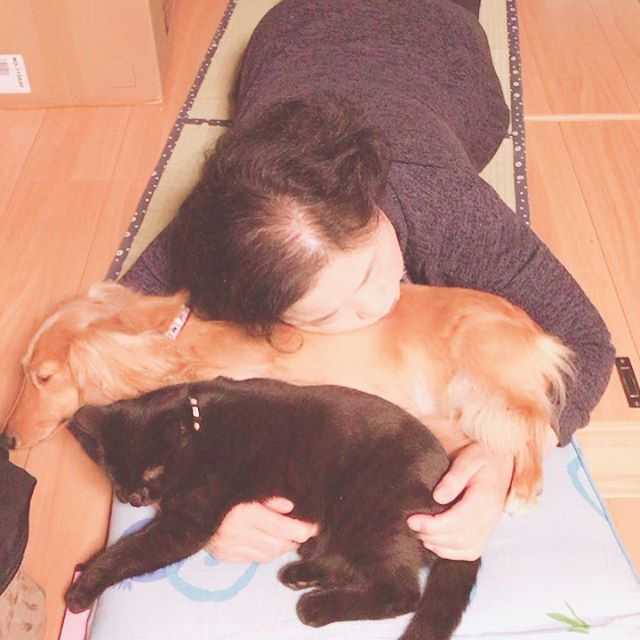ばあちゃんとごあとトトのお昼寝💤 ごあはばあちゃんの枕になってる😂😂 #お昼寝#人#犬#猫 #ミニチュアダックスフンド#3歳 #枕替わり#可愛い#みんな仲良し #何されても誰も怒らない #やられたい放題 #愛犬#愛猫