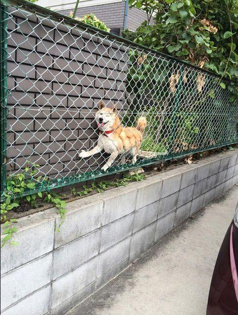 犬《ふっ、ふははは 挟まっちまった》 from Dog combat3