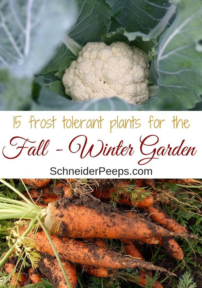 15 Frost Tolerant Plants For The Fall And Winter Vegetable 400 x 300