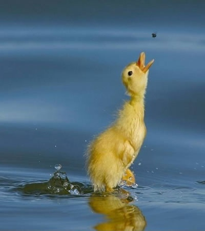 Ducky! oh goodness. so cute!