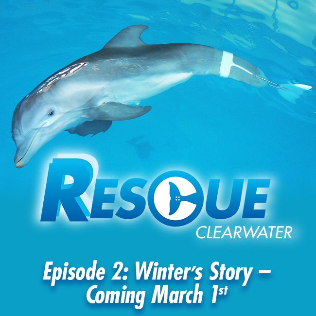29 best images about Rescue-Clearwater TV Series on ...