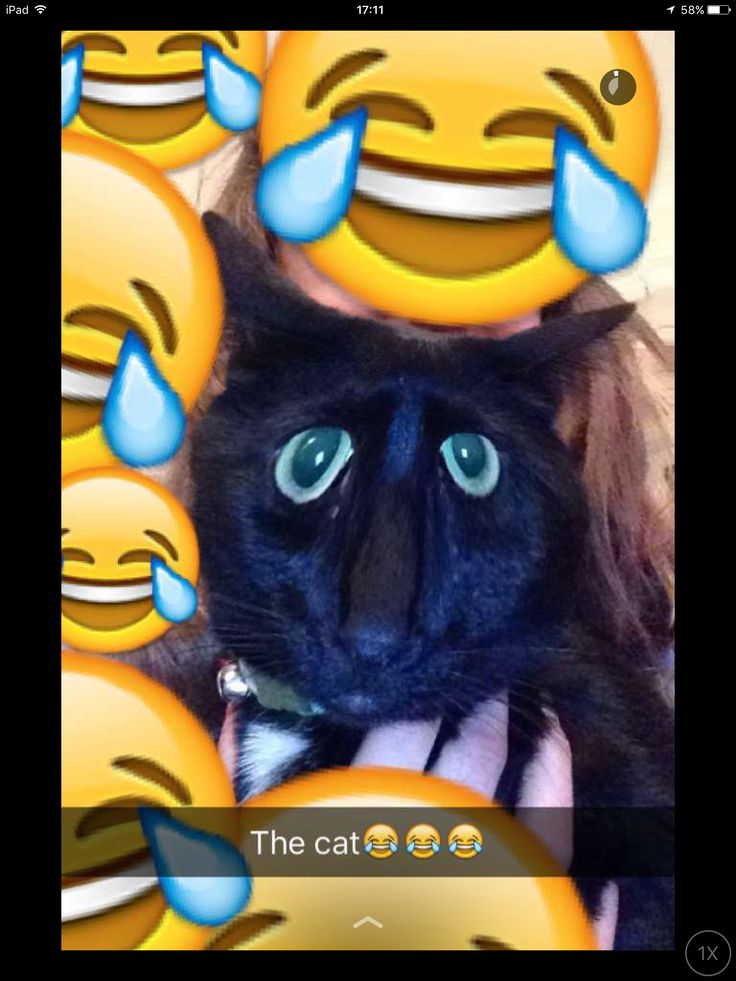 When you use snapchat effects on the cat