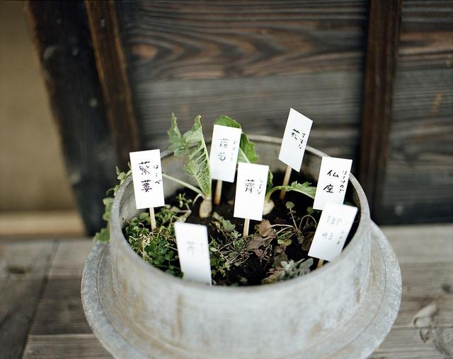 ...a little Japanese herb garden -- masaaki miyara...