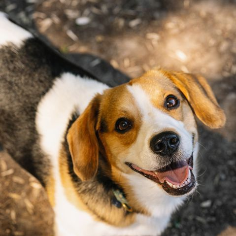 These Short Haired Dogs Make For Low Maintenance Pets Friendly Dog Breeds Dog Friends Dog Breeds