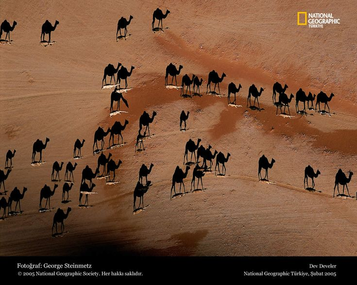 National Geografic: Picture, Desert, National Geographic, Camels, Photography, Shadows, Animal