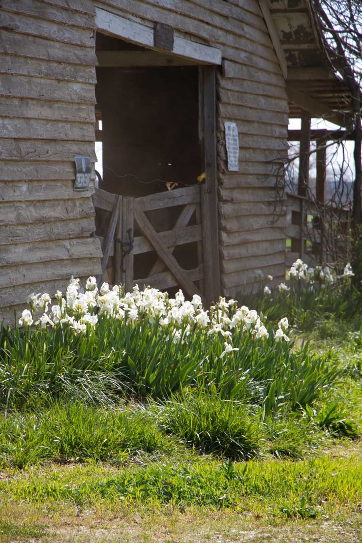 beautyeveryday - Southern Beauty, Creativity, and Food - an oldfarmhouse