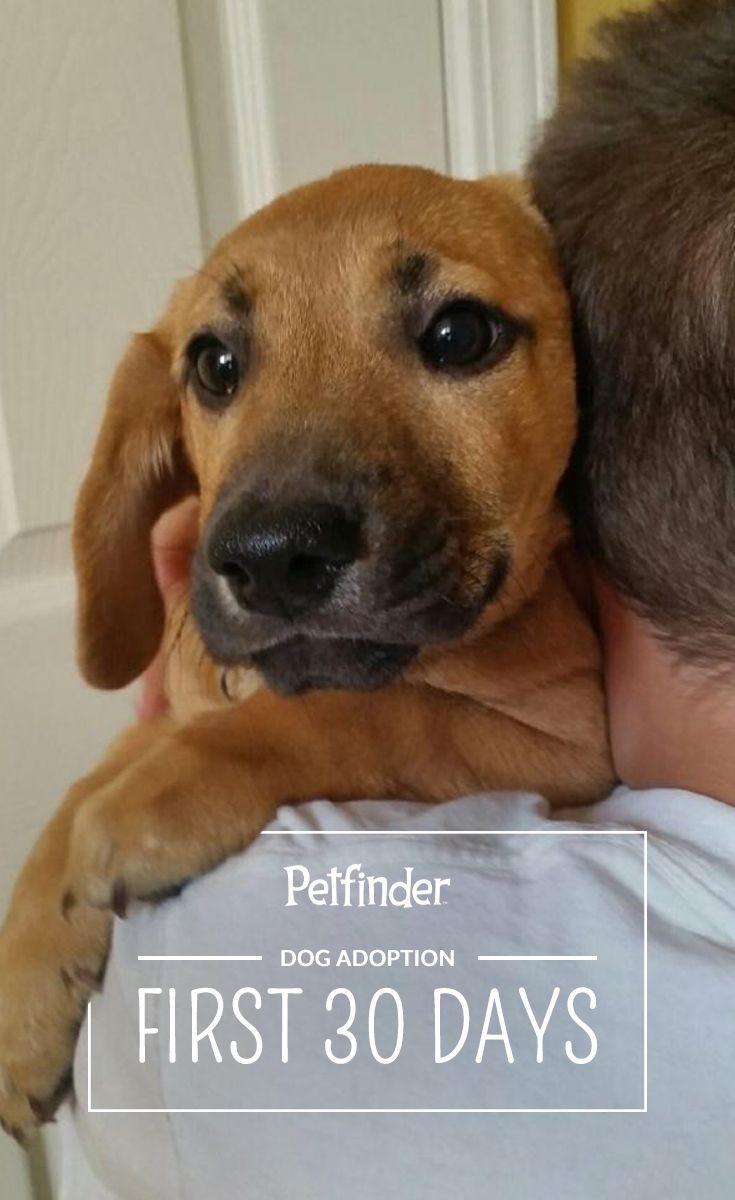 Dog Obedience Training Tacoma