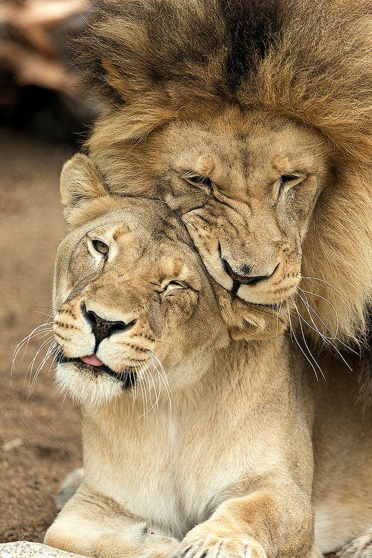 M'bari whispering sweet nothings in Etosha's ear .... errr showing some #love. Photo by Darrell Ybarrondo.