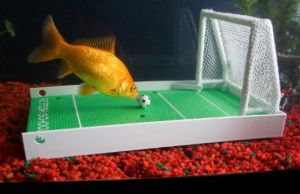 How to Train a Fish: Fish Agility, R2 Fish, Pet, Fish Training, Agility Training, Complete Fish