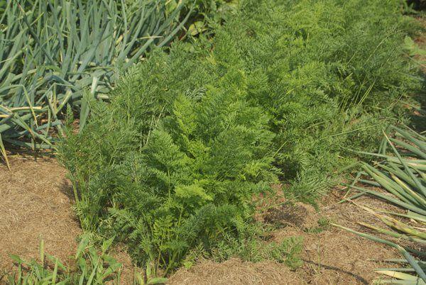 17 Best Images About Plantings On Pinterest P Allen