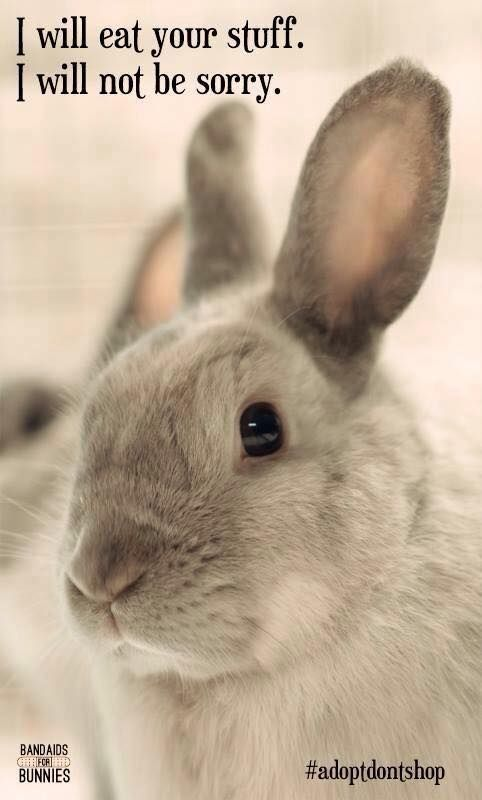 Quotes About Rabbits: 1000+ Bunny Quotes On Pinterest