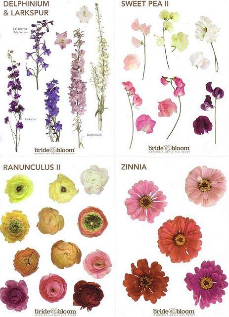 75 best Wedding Flower Education images on Pinterest Flower