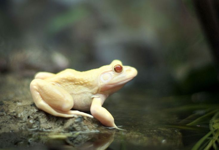 When nature runs out of ink: 25 albino animals – casinhas pet
