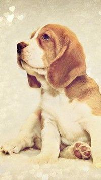 Zakochany smutny pies