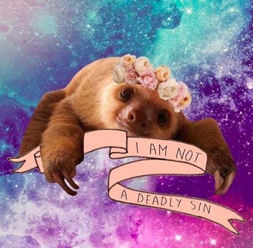 An Ode To Sloths, AKA The Best Animal Living Today. I don't think you can get more hipster...