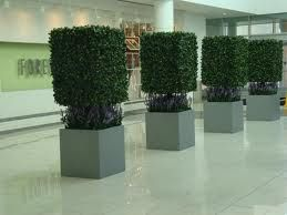 topiary trees - Google Search