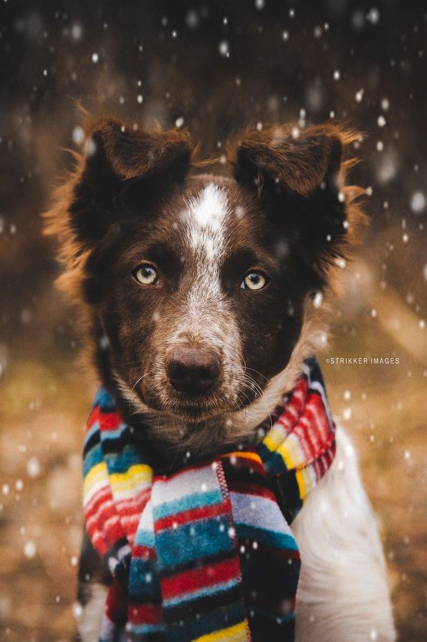 """Fashionable Pup"" by StrikkerImages - Furry Cute Models Strike A Pose! Blog - ViewBug.com"