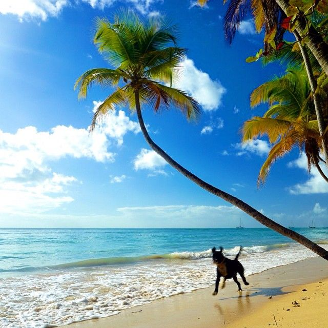Tobago Island: 250 Best Trinidad And Tobago Images On Pinterest