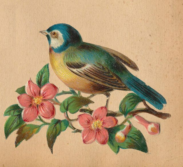 blue bird and blossoms