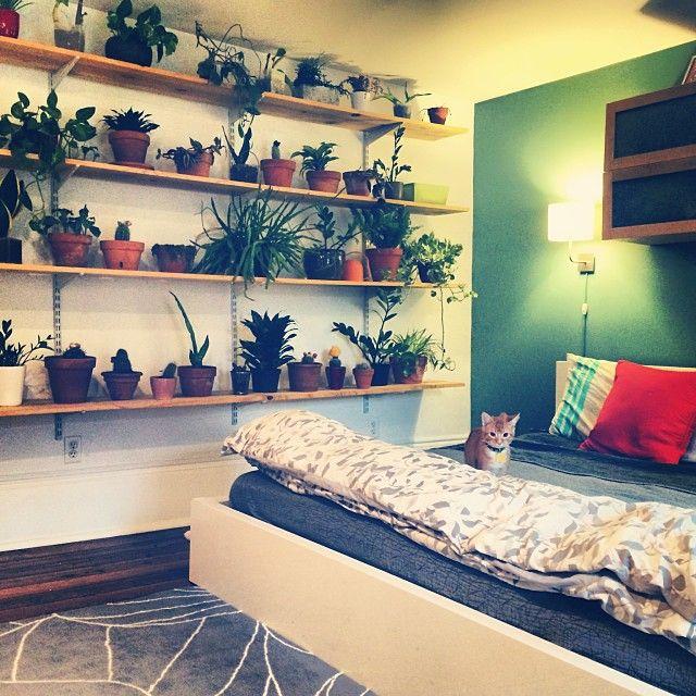 Schlafzimmer Ideen Für Kleine Räume Inspirierend Sträucher: 21 Best Plants Images On Pinterest