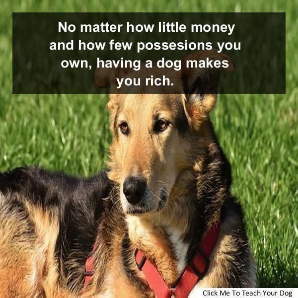 Help Me Train My Dog Dogtrainingtoronto 6069417004