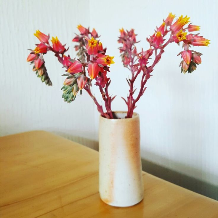 Weekly posy - succulent flowers