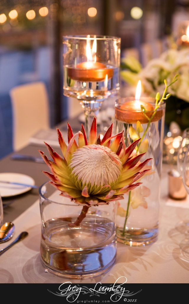 Beautiful pink king protea flower as part of wedding decor at Cavalli Stud Farm in Somerset West, Western Cape South Africa.