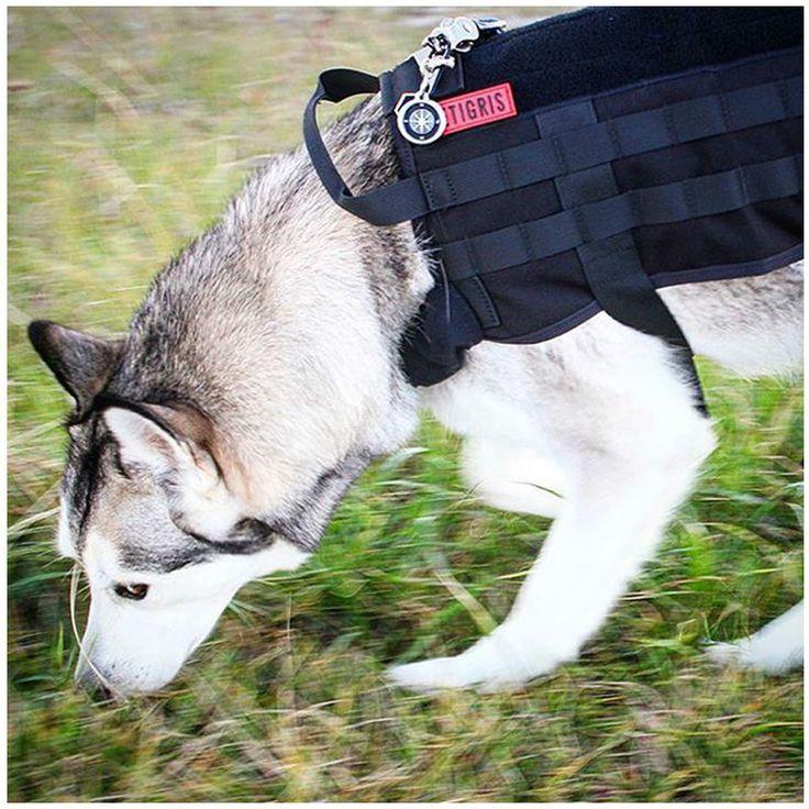 Купить товарOnetigris армии тактический кинологический молл жилет использовать военные несущие жгут сват куртку собаки в категории Жилетына AliExpress.    OneTigris Army Tactical Dog Training Molle Vest Harness Military Load Bearing Harness SWAT Dog JacketUSD 37.95-48.95/