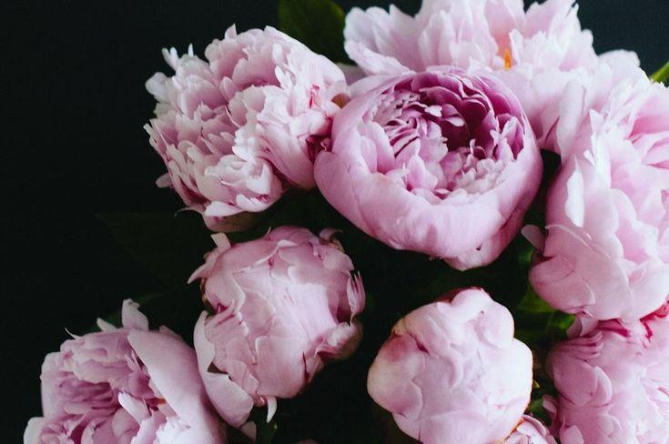 Petit planche d'inspirations pour mon prochain tatouage : une ou deux pivoines juste à côté de mes deux roses sur l'épaule !
