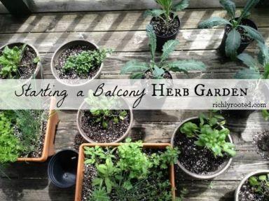 Starting a balcony herb garden