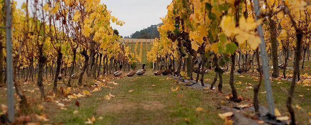 Puddleduck Vineyard | Online Shop | Fine Wine | Online Ordering