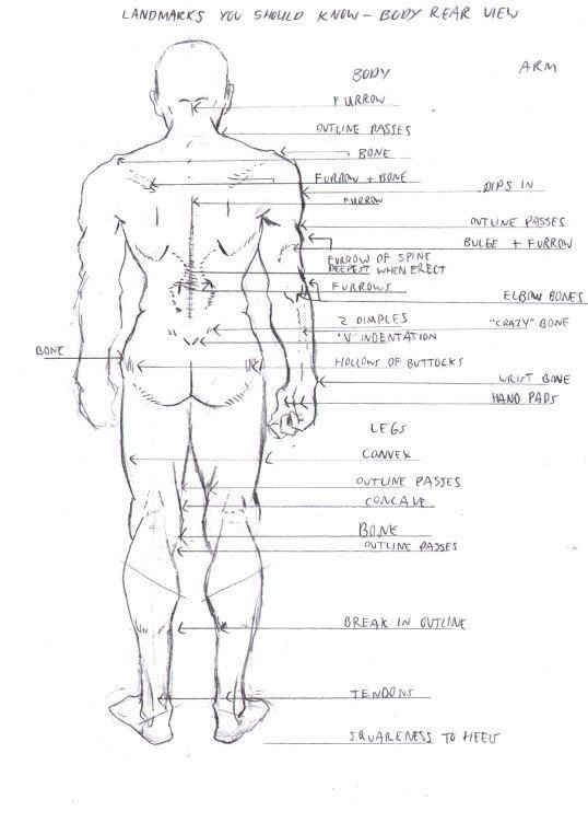 3_16 Landmarks you should know rear body