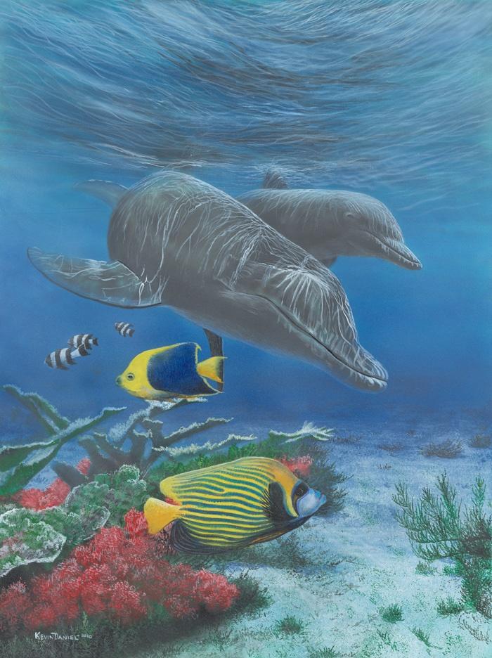 dolphin print kevin daniel