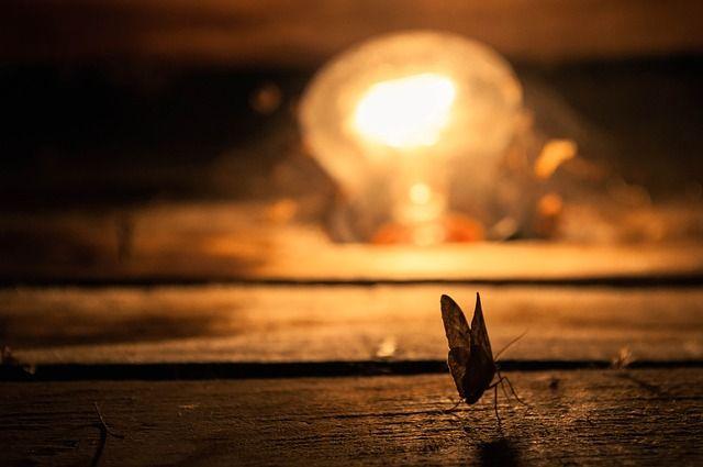 Insekt, Schmetterling Nachtfalter - Kostenloses Bild auf Pixabay