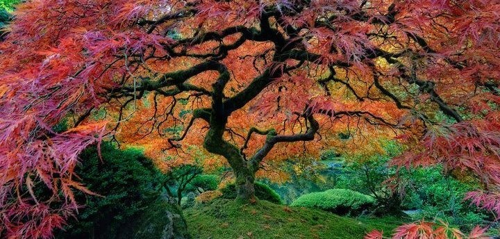 Landscape Glass Portland Oregon : My tree in colour japanese gardens portland and trees