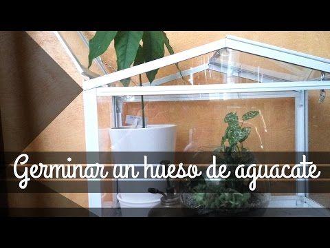 Hojas en Esqueleto con Bicarbonato sódico (Skeleton Leaf DIY) - YouTube