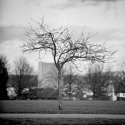 Up on Hilly Fields - looking lonesome