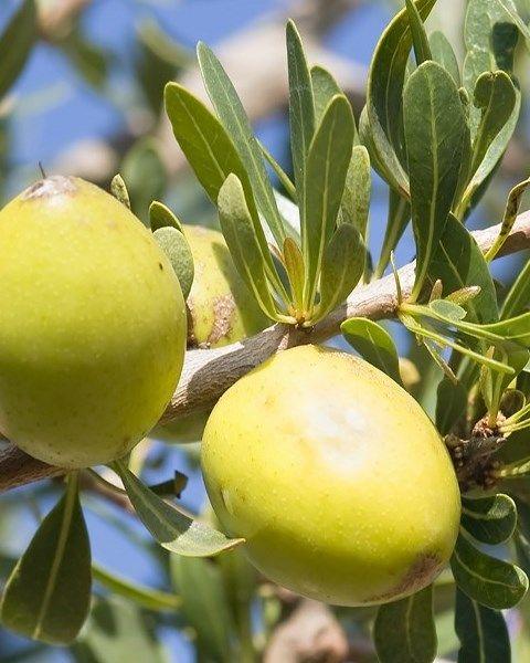 Argan  L'olio di Argan del Marocco è un olio pressato a freddo ricco di Vitamina E, proteine, lecitina, minerali e sostanze nutritive che aiutano a migliorare la consistenza della pelle e sono essenziali per mantenerla sana.   Provatelo come Crema Idratante, Siero per la pelle o per le unghie o per curare la salute dei capelli.