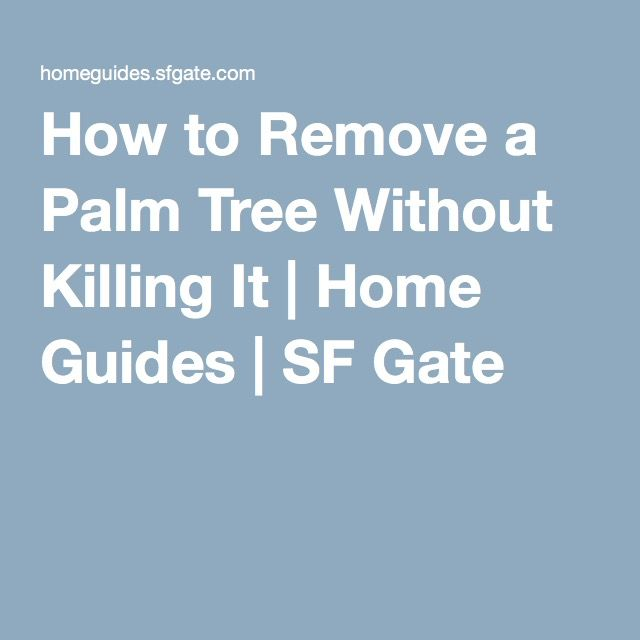 How to Remove a Palm Tree Without Killing It | Home Guides | SF Gate