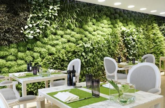 Вертикальное озеленение (113 фото): видео. Вертикальное озеленение в квартире, в офисе, в интерьере, сада, фасада дома. Вертикальное озеленение ресторана Giardino Lounge Ristorante.
