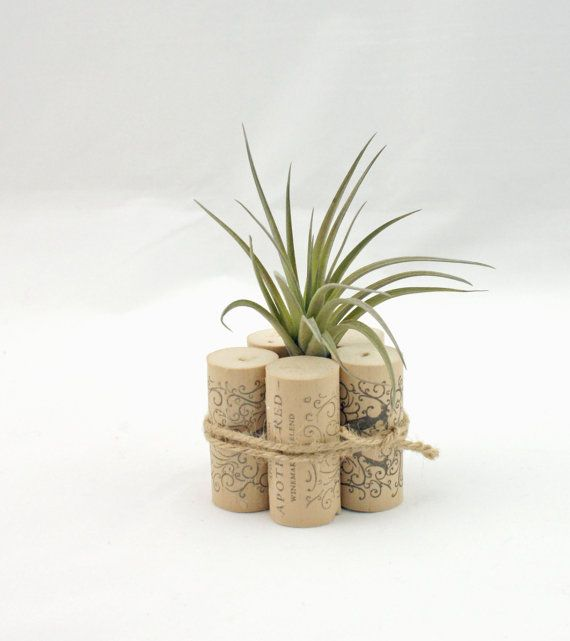 Best 25+ Air plants ideas on Pinterest | Air plant display ...