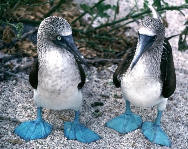 Galapagos  @bucket-list