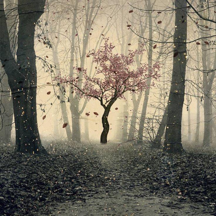 Tout ce qui est vivant est animé par la matrice de l'être: l'âme des arbres - See more at: http://www.espritsciencemetaphysiques.com/tout-ce-qui-est-vivant-est-anime-par-la-matrice-de-letre-lame-des-arbres.html#sthash.9PMdqBH7.dpuf