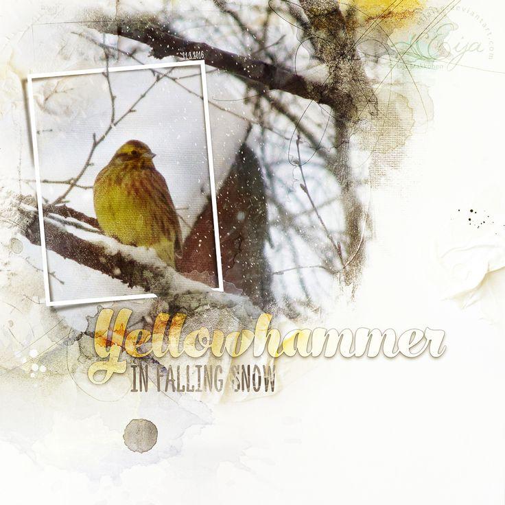 Yellowhammer in Falling Snow by Eijaite.deviantart.com on @DeviantArt